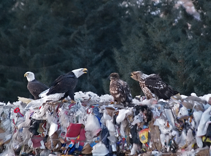Undignified Eagles, Kodiak Dump