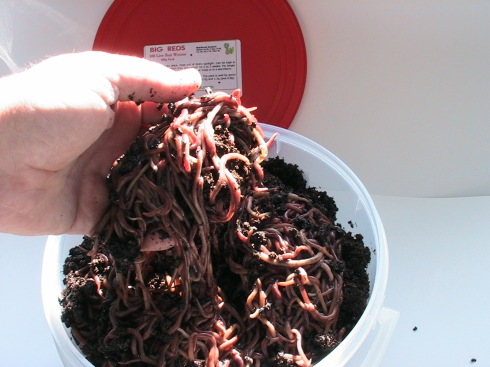Your Basic Bucket of Worms