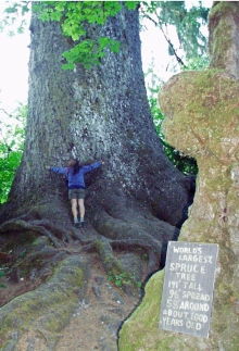 Bonafide Tree Hugger, Olympic National Park, Washington