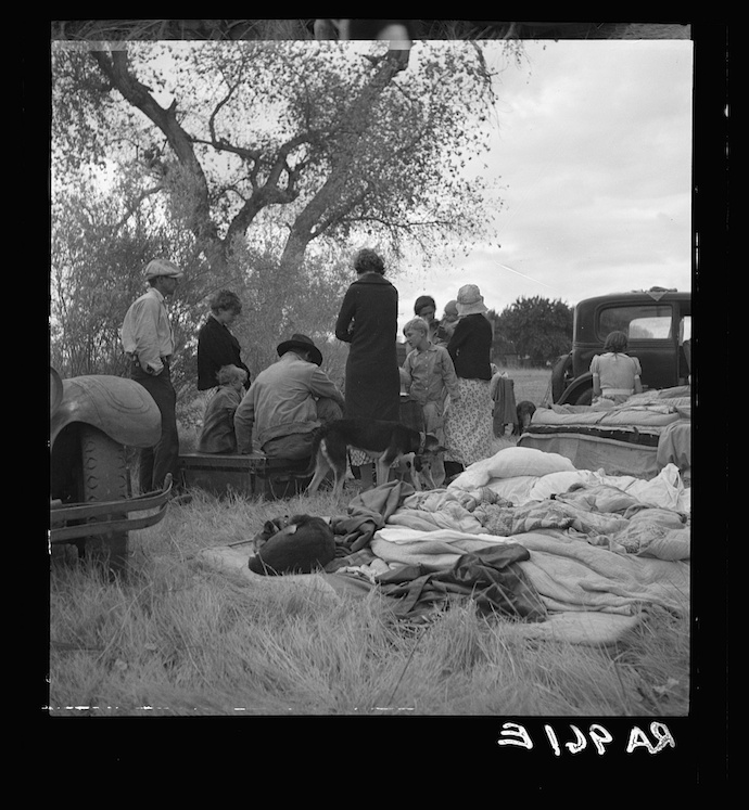 Squatters along highway near Bakersfield, California. Penniless refugees from dust bowl. Twenty-two in family, thirty-nine evictions, now encamped near Bakersfield without shelter, without water and looking for work in the cotton fields