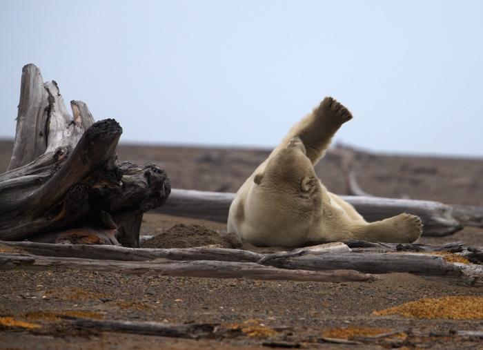 Big Boar Stretch