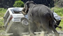 Angry Elephant Acting Out – Photographer Unknown