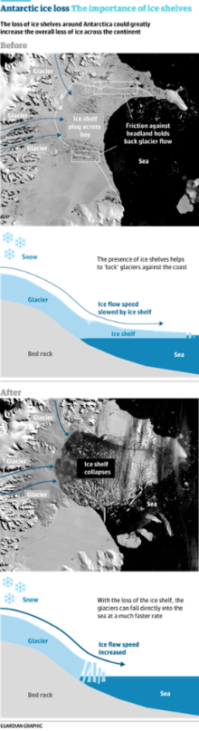 Larsen Ice Shelf, the Simple Version (from The Guardian)