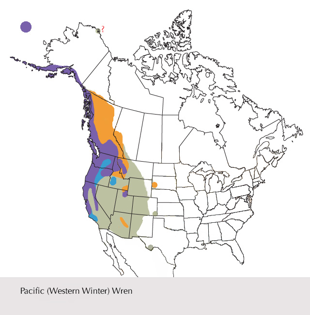 Range of the newly created species Pacific Wren. Record from Barrow, Alaska could be this species or (Eastern) Winter Wren (confirmation needed). This species should be watched for east of the mapped range (especially western Nebraska, Kansas, Oklahoma, central Texas, but also farther east). Map based on the Sibley Guides, copyright David Sibley.