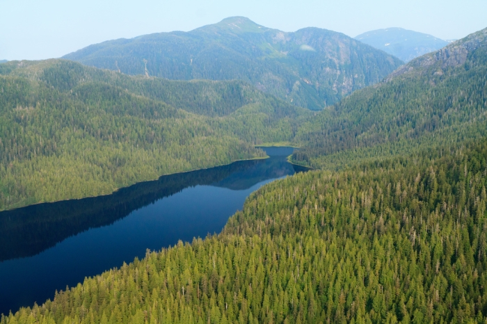 Aerial view, Tongass National Forest, Alaska - Photo credit KTOO.org