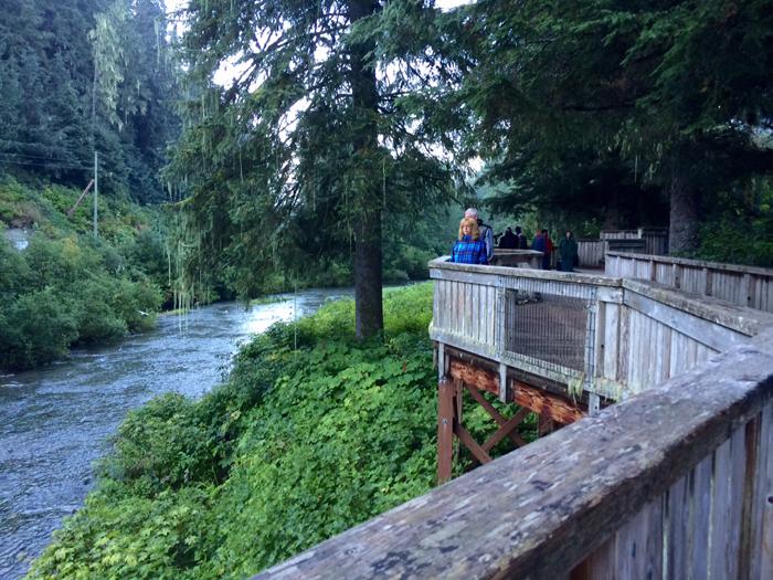 Fish Creek viewing platform in better light. Still no bears. Photo by Mrs. WC