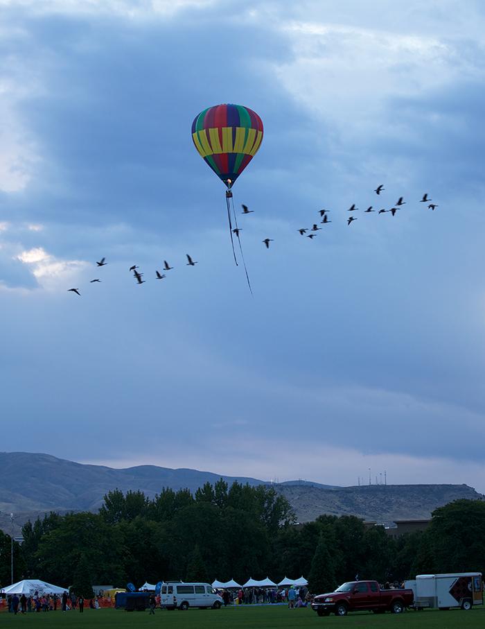 A Trial Ballon, with Canada Geese