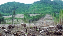 The Forest Service's idea of multiple use: clear cutting the temperate rain forest