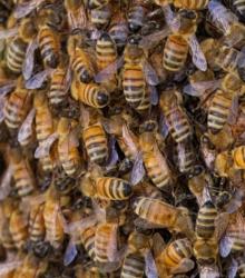Closeup of the Swarm