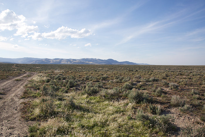 Why they call it the sagebrush sea