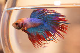 Gordy Vindicated! A Betta Result