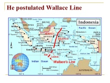 Wallace's Line, as drawn by Alfred Wallace in 1863