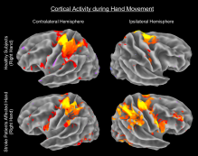 fmri_labeled