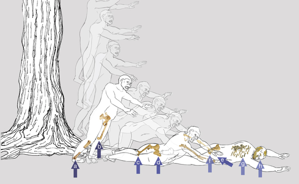 "Here you can see an illustration of what Lucy's fall would have been like. Write the authors in Nature, ""We hypothesize that Lucy fell from a tall tree, landing feet-first and twisting to the right, with arrows indicating the sequence and types of fractures. "" - Via Nature"