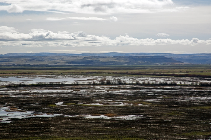 Donner und Blitzen River and Buena Vista Ponds, Malheur National Wildlife Refuge