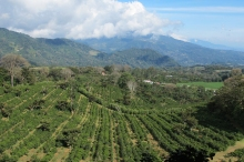 Finca Lerida Coffee Farm, Panama