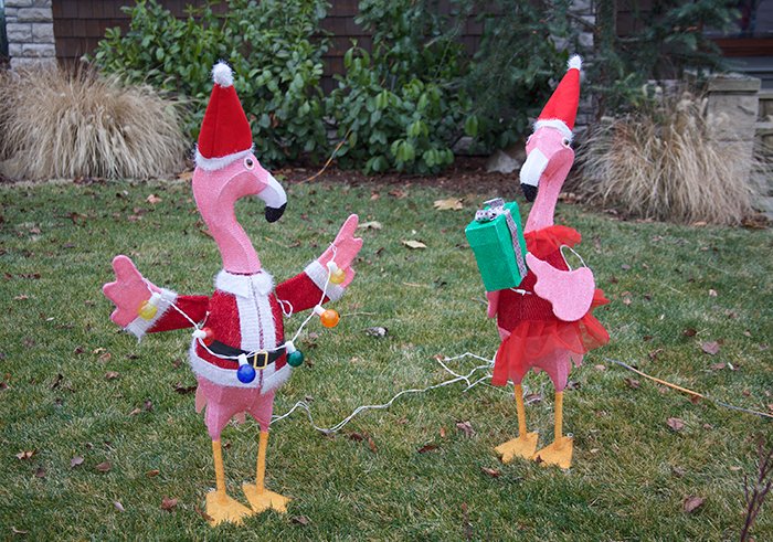 Christmas Flamingoes, North End, Boise, Idaho