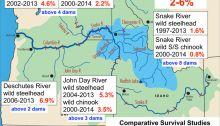 Smolt to Adult Fish Ratios at Dams Along the Columbia and Snake Rivers