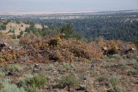 Juniper Slash Pile, Steens Mountain Loop Road, Oregon