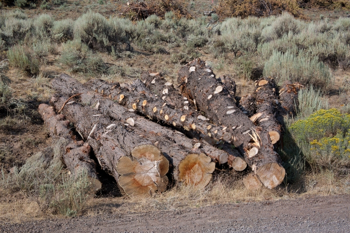 Stockpiled Juniper Tree Trunks, Steens Mountain Loop Road, Oregon