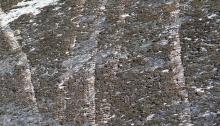Dirt bike tracks on lichen-encrusted rock along Lick Creek Road