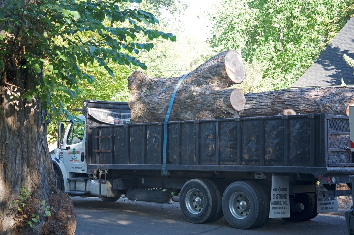 About three tons of tree, no counting the chipped parts.