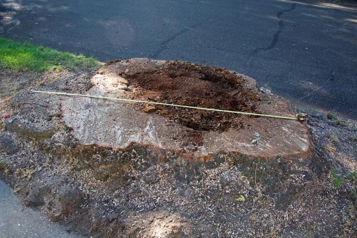 An impressive stump