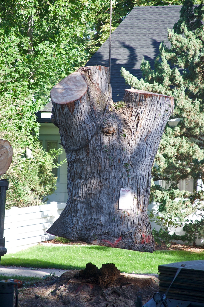 A very large, very heavy stump
