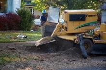 Stump grinding, Boise style