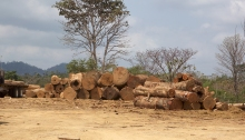 Log yard, just off the Pan-American Highway, Darién Province, Panama