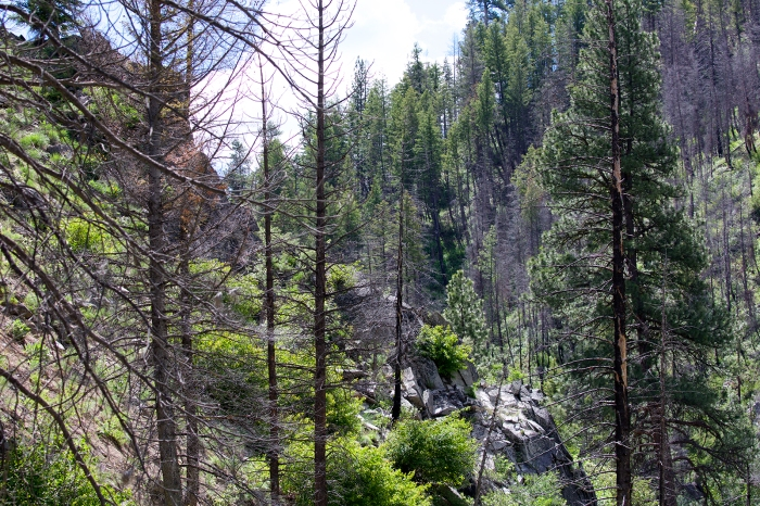 Green Creek, Soldier Mountains, Elmore County, Idaho