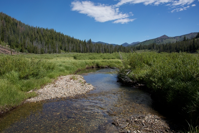 Salmon-free prime spawning habitat, headwaters of the Salmon River, Sawtooth National Recreation Area, Idaho