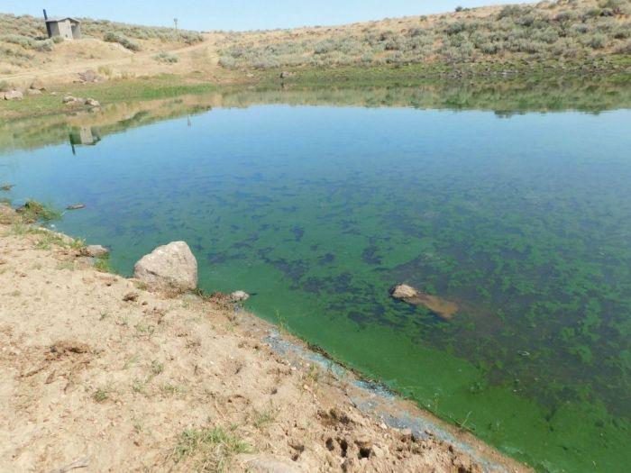 Toxic algal bloom, Mormon Reservoir, Idaho, July 2017