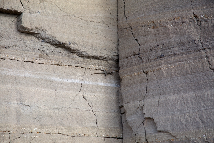 Faulted layers of cinder and ash, northerly rim, Snake River Gorge, Swan Falls (lizard for scale)