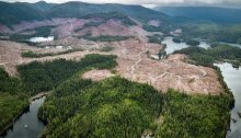 A recent clear cut on Clearcutting, Prince of Wales Island in Southeast Alaska. Lands (Colin Arisman / Wild Confluence Media)